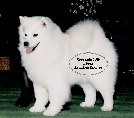 FISSAN is Home  to: AKC CH UKC National Grand Champion Jaybar McKinley's Maggie Too